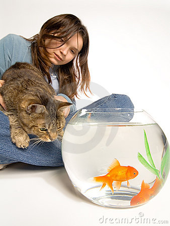 Hungry Cat Watching Goldfish
