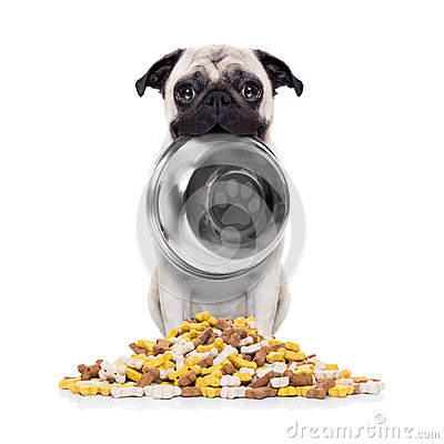 Hungry Dog With Bowl Stock Photo Image 70005107