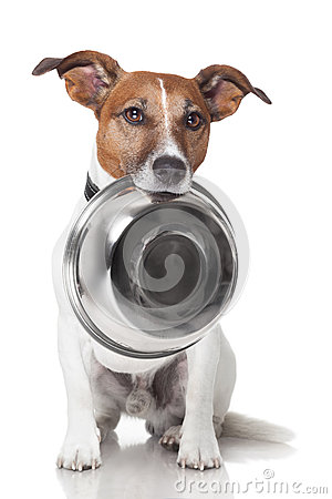 Free Hungry Dog Food Bowl Royalty Free Stock Image - 26639246