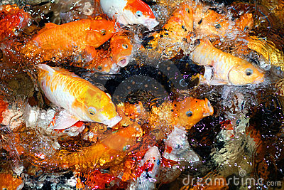 Hungry fishes