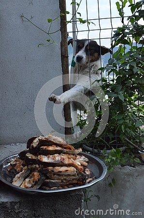 Free Hungry Stray Dog Wants Food Stock Image - 134108391