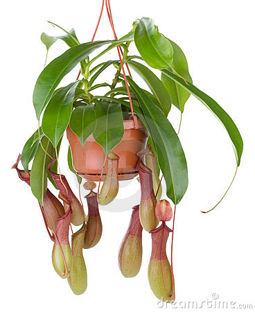Hunter plant