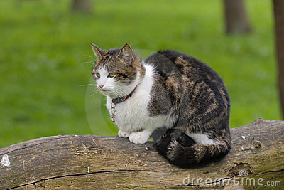 Hunting Cat 2
