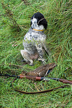 Hunting dog and game