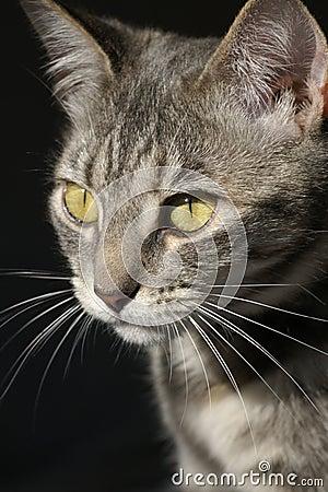 Hunting kitty cat