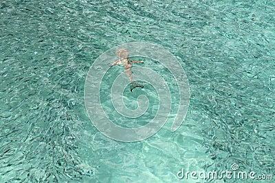 Hunting Shark