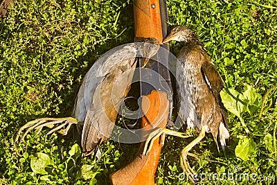 Hunting trophy - crake