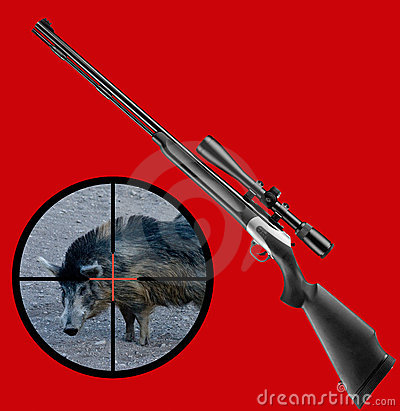 Hunting wild boar
