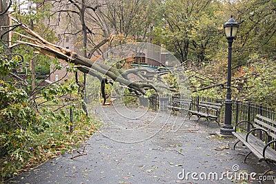 Hurricane击倒的结构树桑迪,曼哈顿 图库摄影片