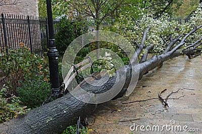 Hurricane Sandy Editorial Stock Image