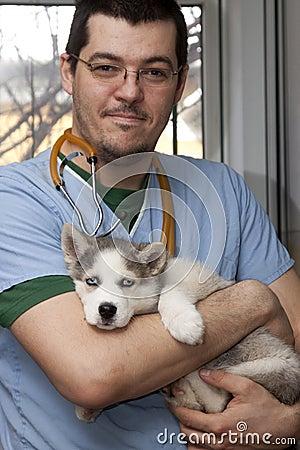 Husky puppy at vet