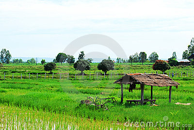 The hut on Cornfield