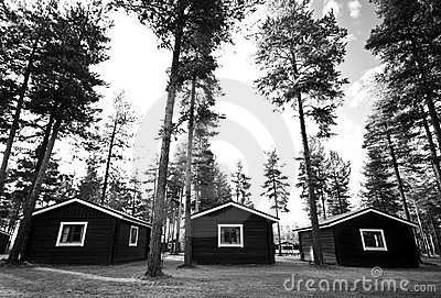 Huts or cabins in forest