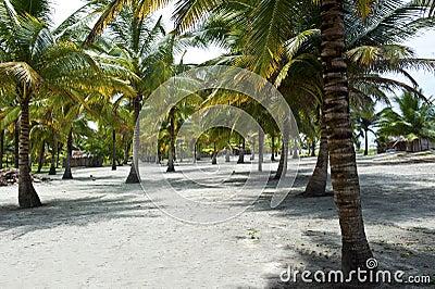 Huts on a tropical beach