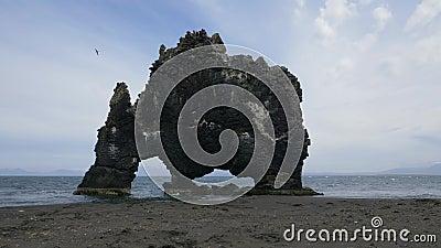 Hvitserkur rock en seagull IJsland stock videobeelden
