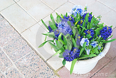 Hyacinths and blue viola