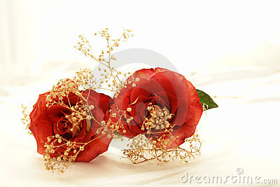 Hybrid Roses 5