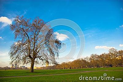 Hyde Park, UK.