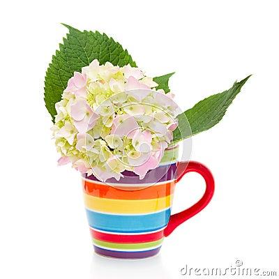 Hydrangea flower in a cup