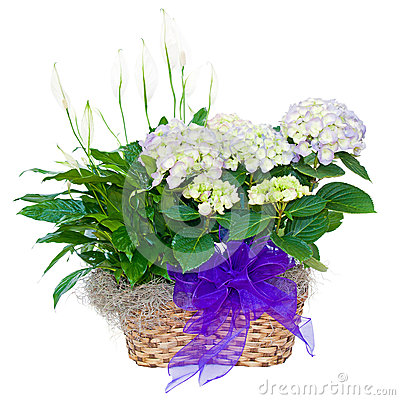 Hydrangea and peace lily flower arrangement