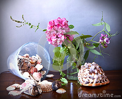 Hydrangea and shells
