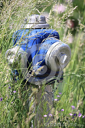 Hydrant Overgrown with Grass