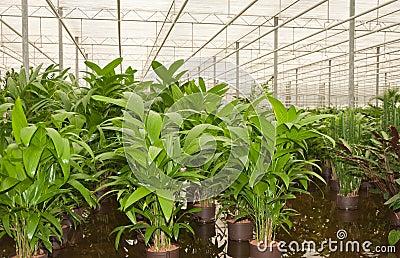 Hydroculture plant nursery