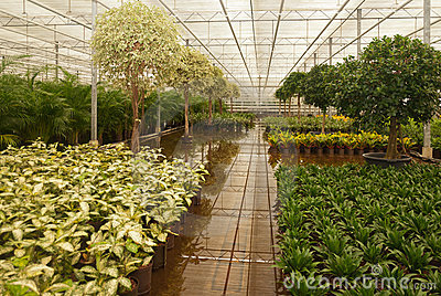 Hydroculture plant nursery in the Netherlands