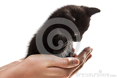 I give a small kitten in good hands