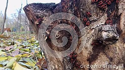 I soldati ostacola strisciare sulla corteccia di albero un giorno soleggiato archivi video