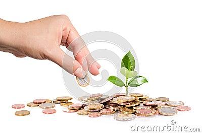 I soldi e la pianta con la mano finanziano il nuovo affare for Pianta con la i