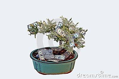 I soldi si sviluppano sugli alberi?