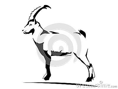 Ibex - goat