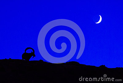 An ibex with the moon