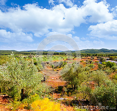 Ibiza island landscape with agriculture fields