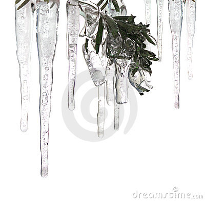 Ice cycles and ice covered branch