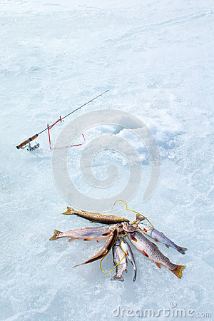 Ice fishing fishing rod hole and catch the fish on a for Frozen fishing pole