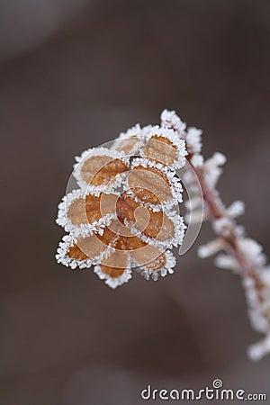 Free Ice-flower Stock Image - 12540661