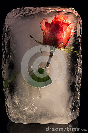 Free Ice Flower Stock Images - 49495314