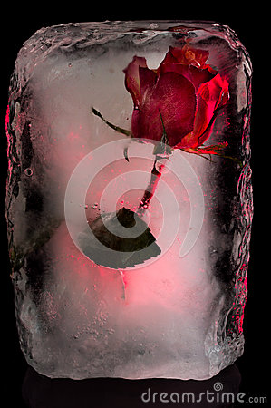 Free Ice Flower Royalty Free Stock Photography - 49495327