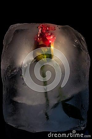 Free Ice Flower Royalty Free Stock Photo - 49495445