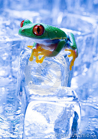 Free Ice Frog Stock Images - 1890434