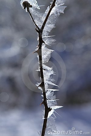 Ice frost in winter
