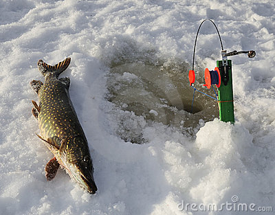 Ice pike fishing in Sweden
