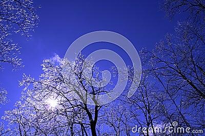 Ice tree 4