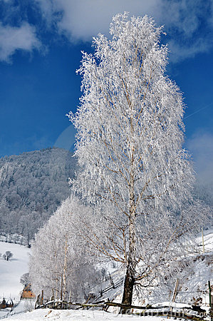Ice Tree Winter Romania