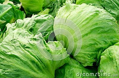 Iceberg lettuce Stock Photo
