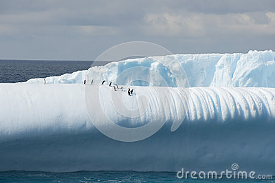 Iceberg with penguins