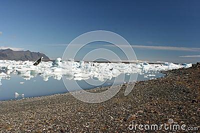 Icebergs beach