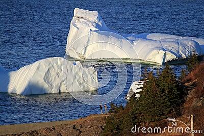 Icebergs in Harbour